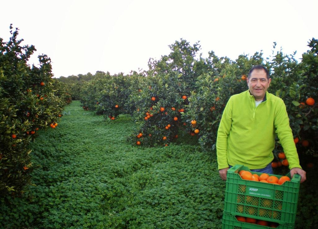 Naranjas de Pep: fin de temporada
