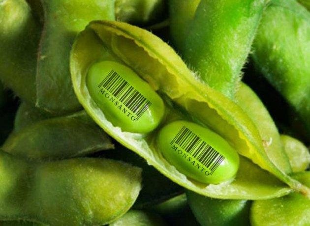 Confirmado el Glifosato de Monsanto es cancerígeno