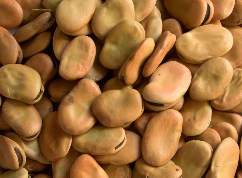 Graneles: haba seca 0,5 kg