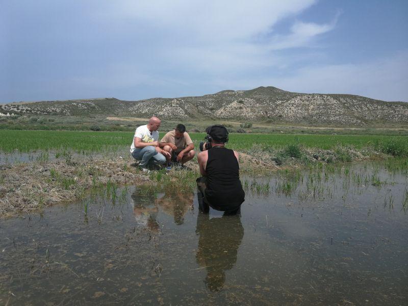 El Alcaraván: arroz cultivado en las Bardenas (Navarra)